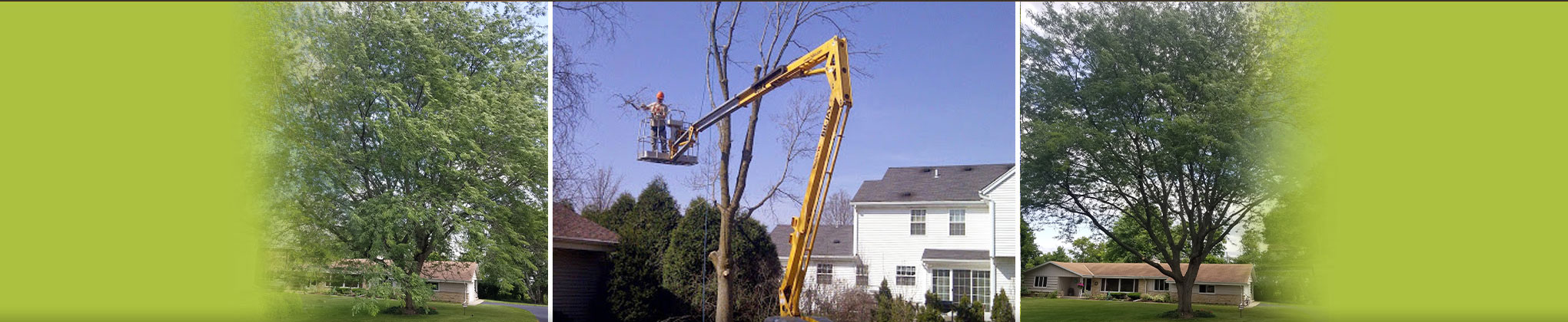 Dan's Tree Service Inc.