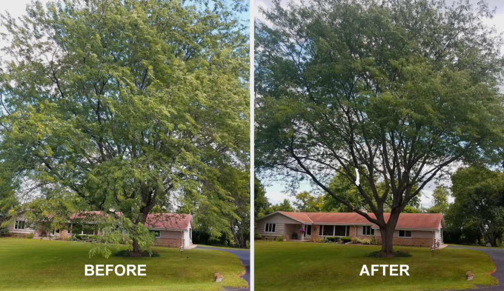 TREE-TRIMMING-BEFORE-AFTER