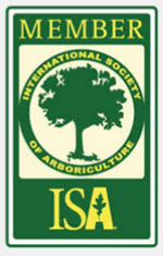 Yearly Member of ISA