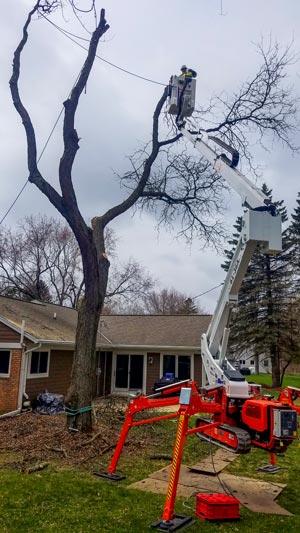 Tree removal service, bucket lift operator