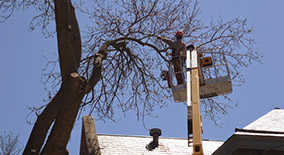 Dan's Tree Service, Inc.