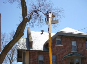 Tree Removal by Dan's Tree Service of New Berlin