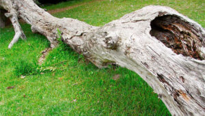 Know When It Is Time to Remove Your Tree