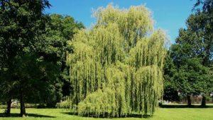 Fast Growing Trees vs. Slow Growing Trees