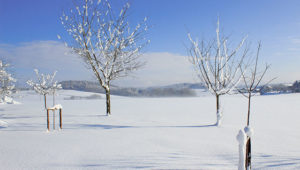 Prepping Your Trees For Winter