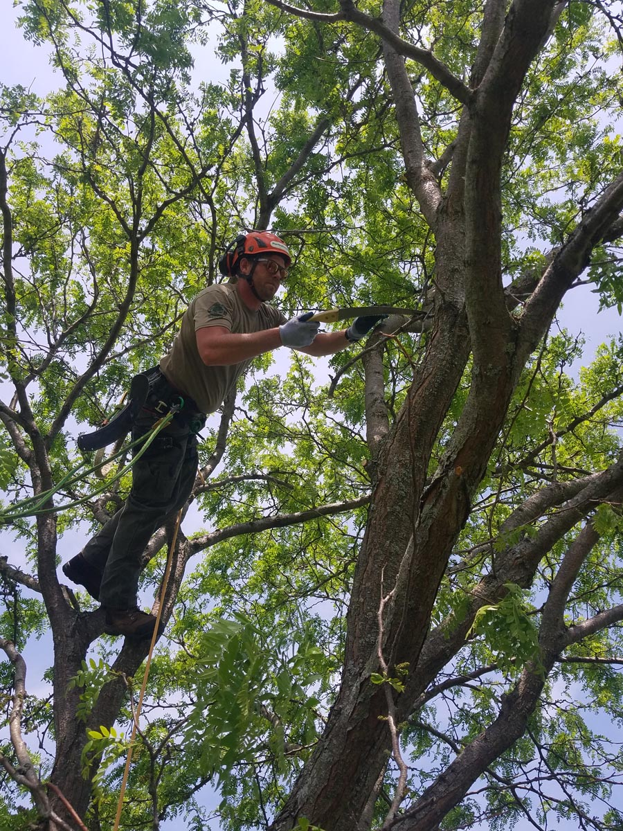 Professional Tree Trimming Service
