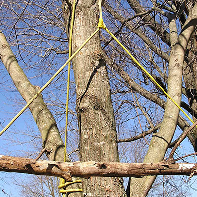 Tree Rigging Experts