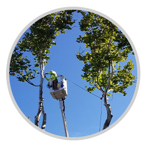 Professional Tree Care by Dan's Tree Service, Inc.