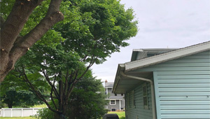 Tree Pruning Over Roof