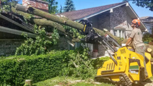 Reasons for Tree Removal